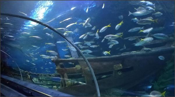 พิพิธภัณสัตว์น้ำมาเลเซีย